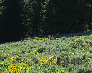 Company off trail on Elk Mountain.