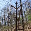 Bear poles.  There is a push pole to get your bag up to the arm.  These are standard for Shenandoah NP.