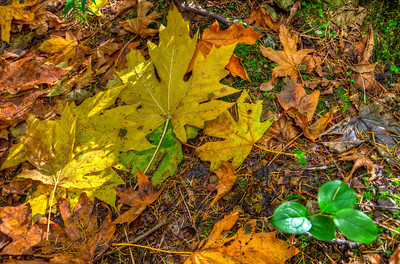 The visual richness of autumn forest floor beckons one to pause and truly see.