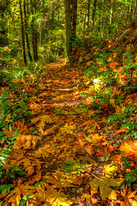 """Many, or should I say most, of these fallen leaves are over 12"""" across."""