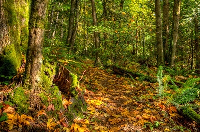 The trail is really a moss garden on trees, stumps, boulders and ground.