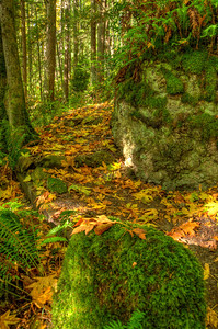 As one would expect, there is a profusion of moss. In fact the moss is thriving. Note to self: Identify the many varieties of moss.
