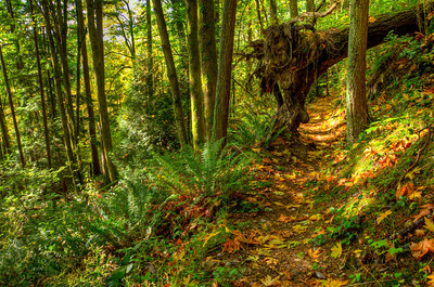 This dead fall forms a graceful arch over the trail.