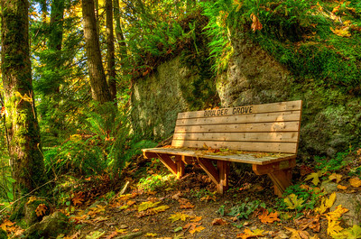 """About a third of the way up there's a bench by a huge boulder with vistas to more huge moss and fern covered boulders. The routed inscription on the bench appropriately says """"Boulder Grove""""."""