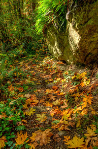 Stone steps are barely visible in the leaf strewn environment. Boulders and ferns are common.