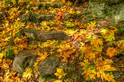 Someone cut these steps from the trunk of a large dead tree trunk. Artfully well done!