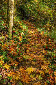 The fallen leaves provide a welcome counterpoint of color the the year round brown and green of the woods.