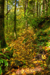 Although it might look repetitious, every part of the trail has its own personality.