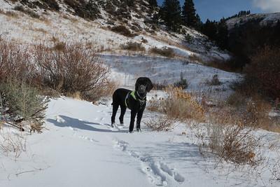 Toby enjoys the winter.