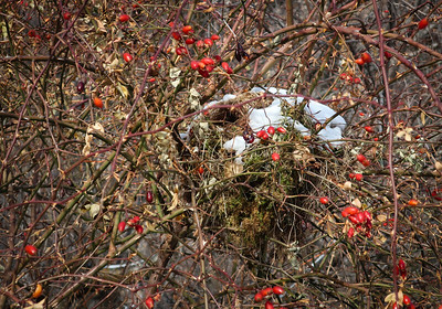Pretty warm looking nest hideaway.
