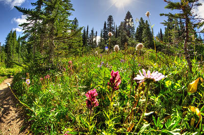 Nice diversity of wildflowers, a bit past their prime, take as a grab shot on the way out.