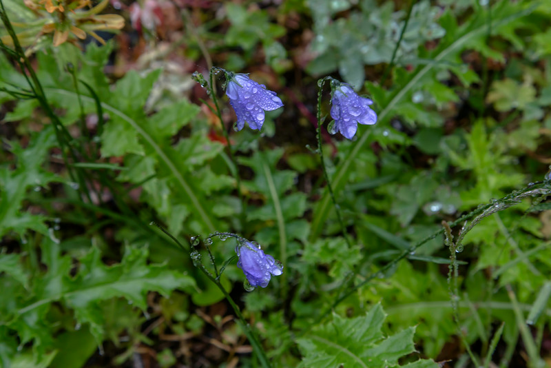 Day 9 Blue Bell_8158
