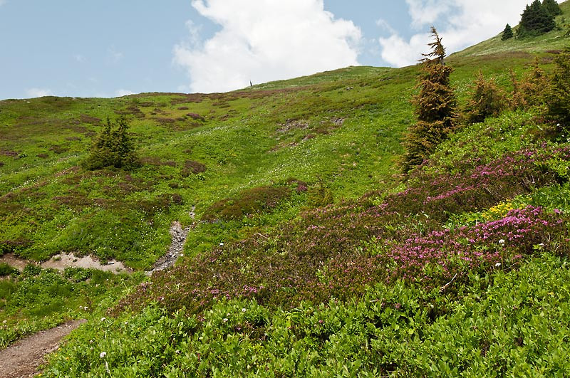 The south facing slopes beginning to burst forth with wildflowers.