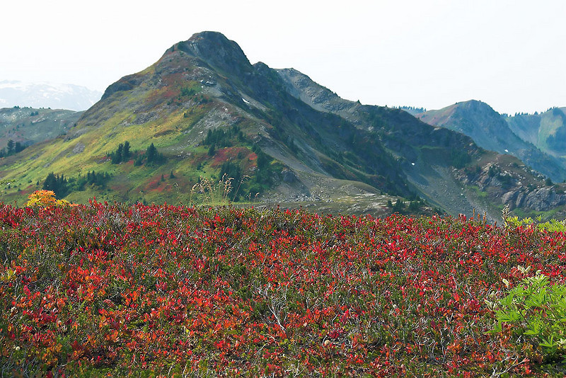 Wonderful fall color and it is still early.  In another two weeks this scene will turn all reds and oranges.