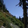 Hillside along lower trail #1
