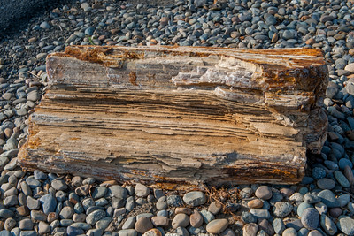 Petrified wood at the entrance to Wanapum State Park.