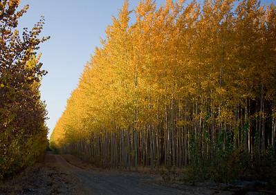 Oregon Tree Farm 2008