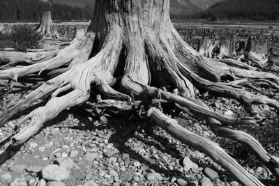 Stump Lake w/Milly - 2009