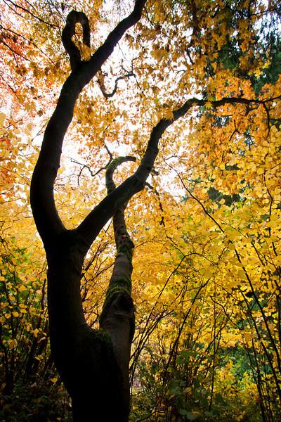 Washington Park Arboretum - Fall 2012