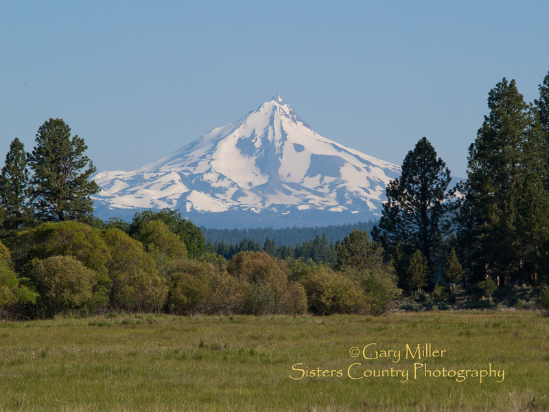 Mt. Jefferson from Indian Ford Meadow - Gary N. Miller
