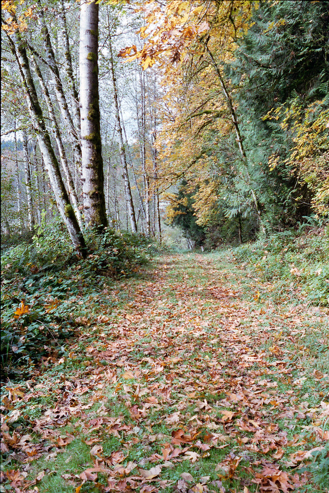 Flaming Geyser State Park Trail