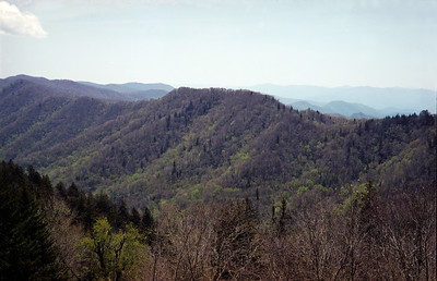Smokey Mountains from Newfound Gap