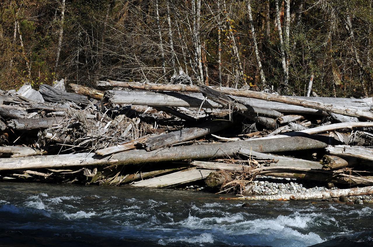 Salk River Tree Fall