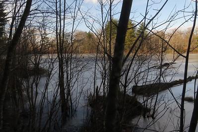 A big swamp