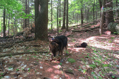 Leo's first hike
