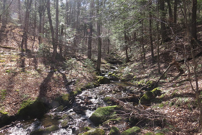 Found a woods route that lead to the tributary, unfortunately also led away