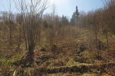 Clearing at 2100 feet, more overgrown than I'd hoped
