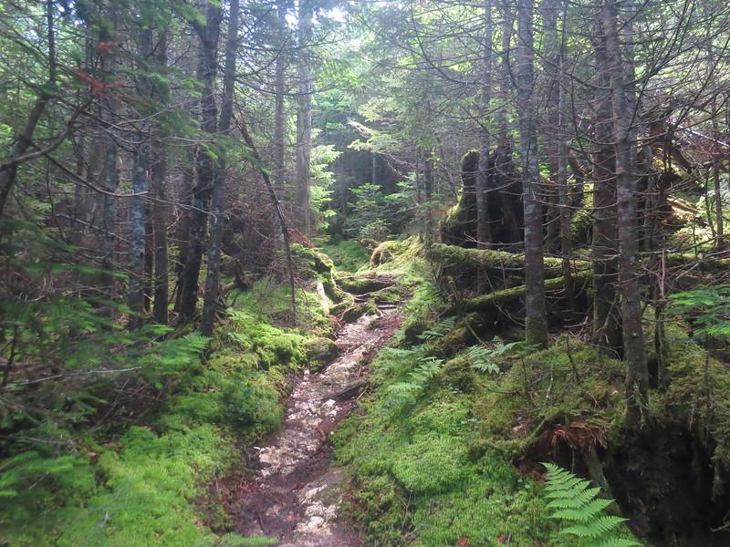 My favorite, moss woods