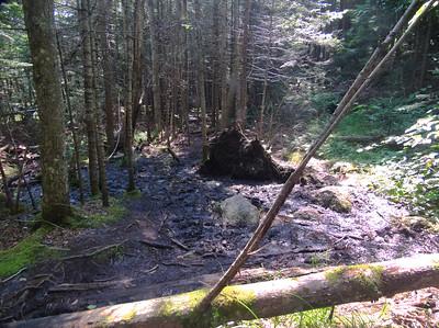 Black Pond Supposed Bushwhack Mud Hole