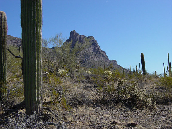 On our way to the very top of Picacho Peak.