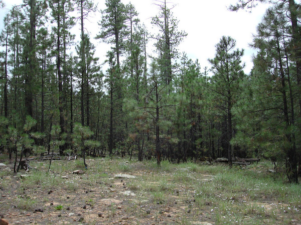 Our hike takes us through the Ponderosa Pine Forrest