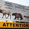 Heading toward Banff townsite