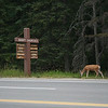 Near Banff townsite
