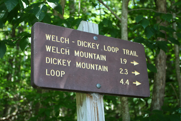 Welch Mountain -- Dickey Mountain loop...August 1, 2010