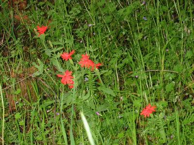 Wildflower Hike - April 15 '06