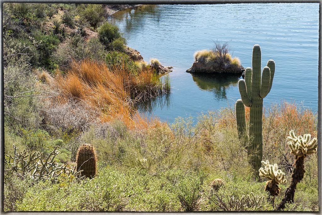 Butcher Jones Trail Along Saguaro Lake