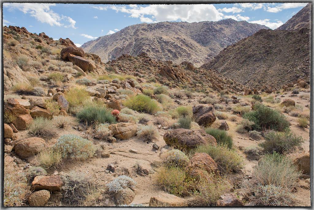Desert in Joshua Tree