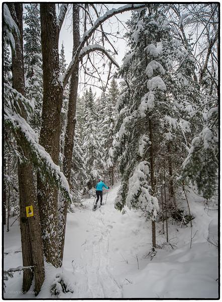 Sharon Snowshoeing in a Winter Wonderland
