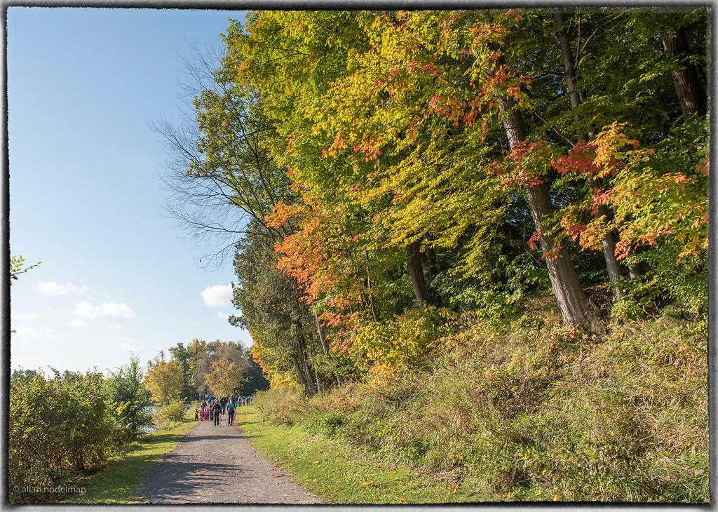Fall Foliage Along the Madawaska River Bank