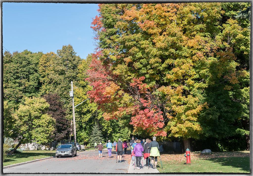 Fall Foliage in Arnprior