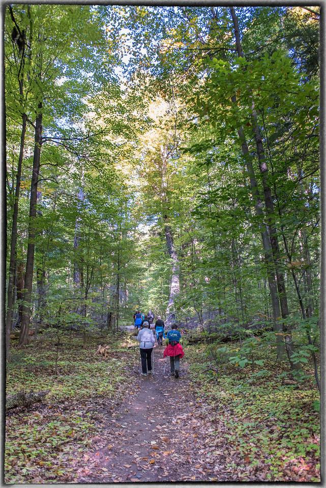 Gillies Grove Trail