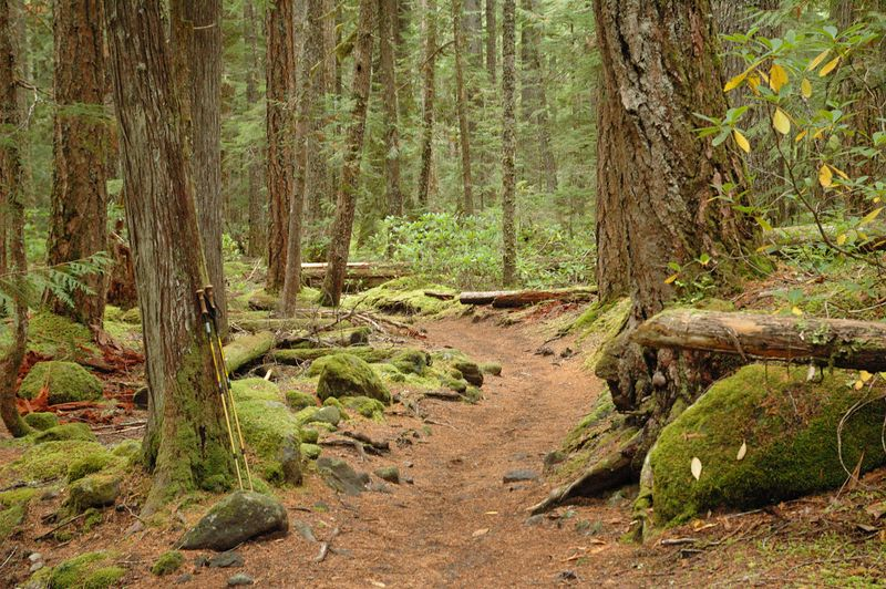 Pamelia Lake Trail
