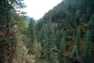 Picture of the Eagle Creek Canyon.