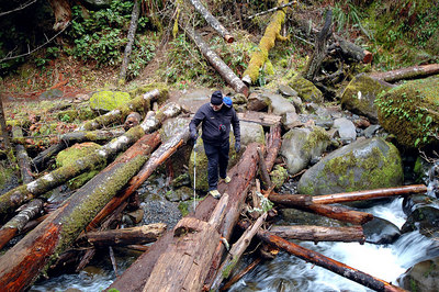 Pic of my hiking buddy. Here is what's left of a log bridge crossing after it was all busted apart by Mother Nature. On the way back I took a very wrong step and stretched my right knee out like silly putty. Boy did it hurt the next day!