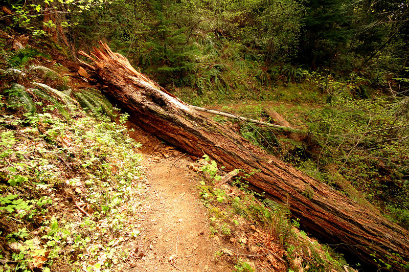 A very large tree blocking the trail. There was another one further on that was even bigger.