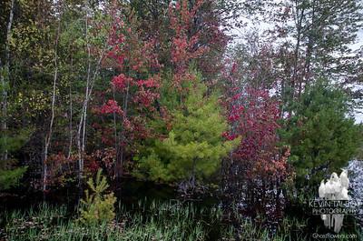 Burnt Meadow Pond 8-11-18
